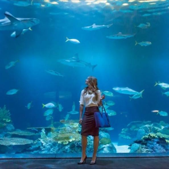 Katie's authentic creativity came to life in her darlingdressedduo blog, she was recently recognized by Crain's Business Chicago and photographed at one of her favorite places, Shedd Aquariam.